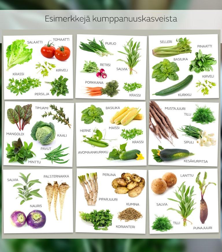 Kumppanuuskasvien avulla sato on maukkaampi ja runsaampi.