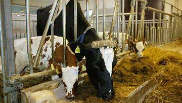 Maataloustyöt kuormittavat kroppaa.