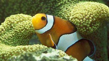 Koralliriutta kuhisee vedenalaista elämää.