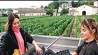 viininkorjuuta Ranskasta