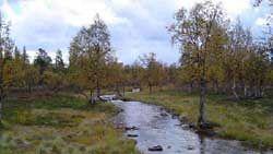 Kaarina Heiskanen