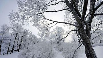 Kesän vihreys on vaihtunut talven hiljaiseen kauneuteen.