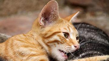 Kissanpissan tuoksu viinipullossa johtuu rikin yhdisteestä.