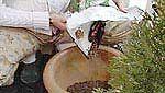 Suuret ruukut täytettiin puoliksi lekasoralla