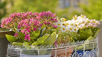 Kukkakorit ja -ruukut ovat käytännöllisiä pienellä parvekkeella.