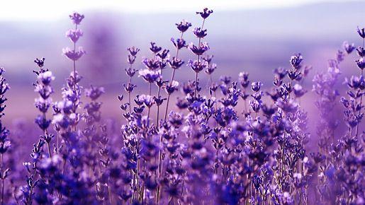 Ihana laventeli rauhoittaa. 40ceb4247d