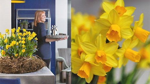 Aurinkoiset narsissit tuovat kevättä myös sisätiloihin.