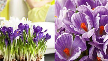Kuva: Kukkainfo
