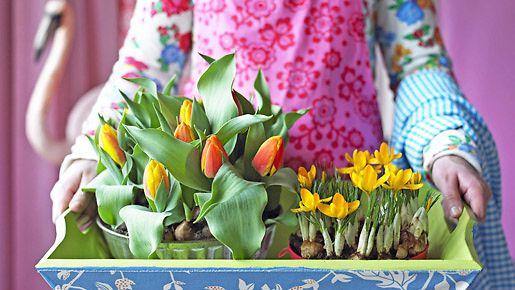 Tulppaanit ja narsissit ovat suosittuja leikkokukkia, mutta mulllassa ne kestävät kauemmin. Kuva: Kukkainfo