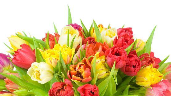 Värikkäät tulppaanit muistuttavat keväästä.