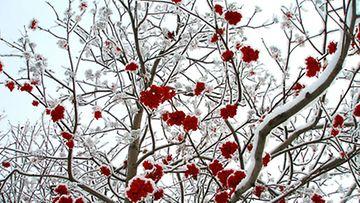 Talvisen puutarhan hehkua.