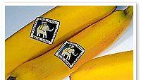 reilun kaupan banaanit