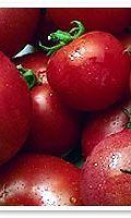 tomaatteja