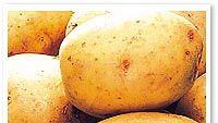 perunat ruudussa