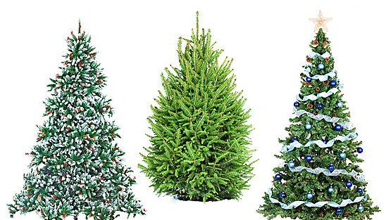Aito kuusi tuo joulun tuoksua kotiin.