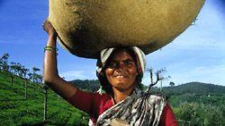 Suomessa myytävä Reilun kaupan tee viljellään pääasiassa Intiassa, Sri Lankassa ja Tansaniassa.