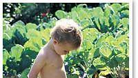 Lannoitus on puutarhassa tärkeää. Kuva: futureimagebank.com