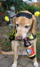Bowser beer, koirien olut
