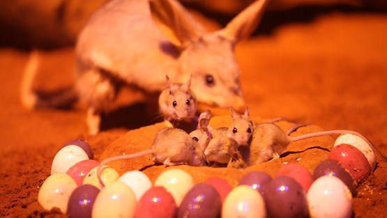 Isopussikaniinien pääsiäinen