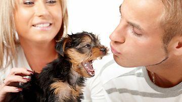 Haukottelevatko koirat samaan aikaan kuin omistajansa?