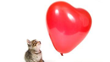 Kissat osaavat varastaa ihmisen sydämen!