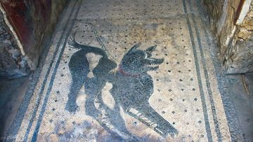 cave canem, pompeiji, varo koiraa