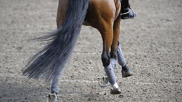 Vakavat ratsastusonnettomuudet ovat erittäin harvinaisia, vaikka hevosen selästä putoamisia sattuu yleisesti.