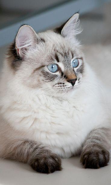Tarja Halonen Kissa