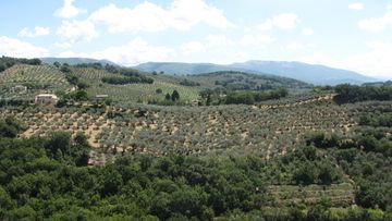 Paikointireitillä oliivilehtojen välissä.JPG