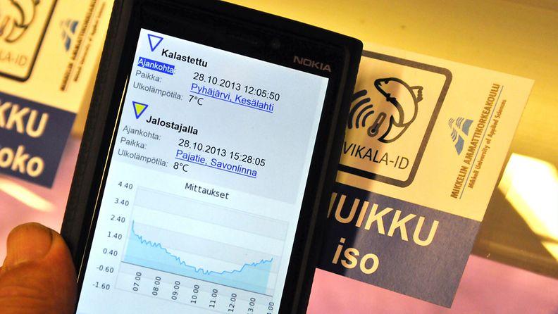 Älypuhelimella voidaan lukea kalatiskillä olevasta RFID-tarrasta myynnissä olevien kalojen tiedot. Mikkelin ammattikorkeakoulu esittelee seurantajärjestelmän järvikalan toimitusketjulle Mikkelissä, 29. lokakuuta 2013.