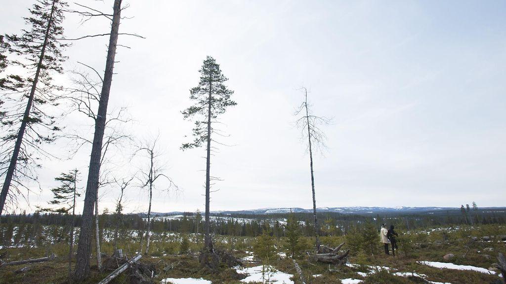 Suomen kaivokset ulkomaisissa käsissä – jälkipolville heikot mineraalivarat? - Studio55.fi