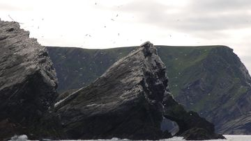 Cliffs_Hermaness_Gannets