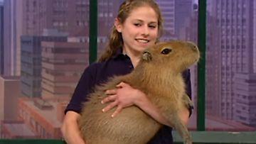 Millie-kapybara