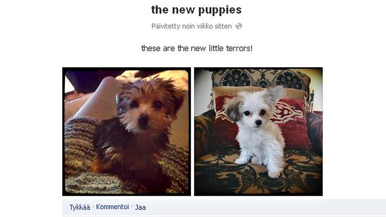 Milla Jovovichin uudet koiranpennut Maya Papaya ja Sweet Potato. Kuvakaappaus: Facebook