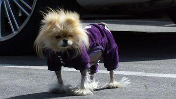 Lisa Vanderpumpin Giggy-koira.