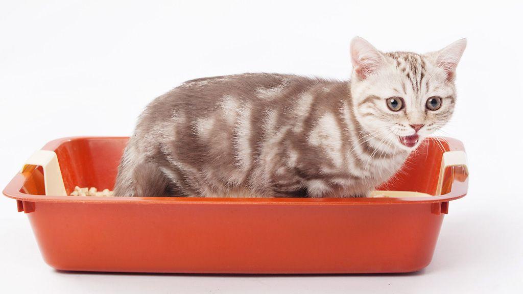 Kissa Pissaa Sohvalle