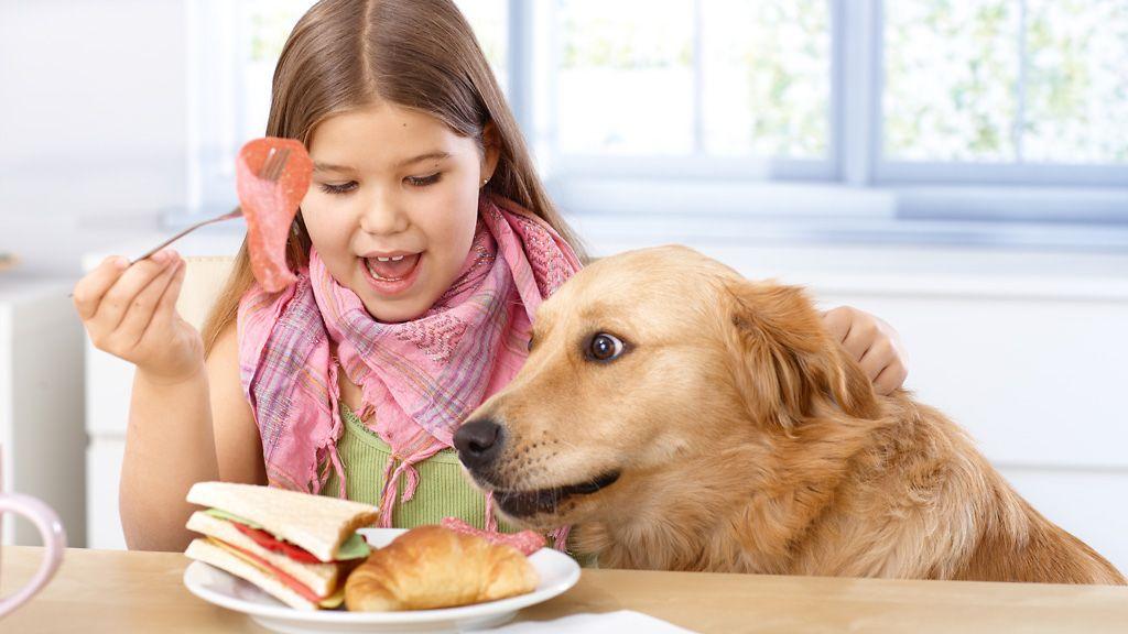 Saako Koiralle Antaa Banaania