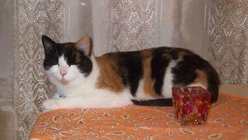 Anni-kissa Kuva: Kristiina Viirlaid