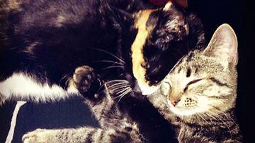 Kissat Paavo ja Peppi. Kuva: Jannika Uusitalo