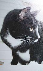 """Pandora-kissa: """"Arvoituksellinen Pandora kissani."""" Kuva: Anne Kaski-Klöve"""