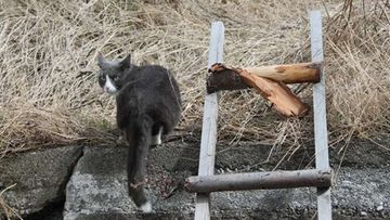 """Mies-kissa: """"Hei kaverit, tätä tietä !"""" Kuva: Susanne Kopra"""