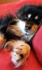 """Santtu-koira: """"Ilman stressiä..."""" Kuva: Eeva-Liisa Impola"""