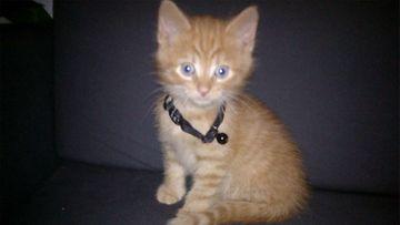 Viiru-kissa. Kuva: Jonna Ahvenainen
