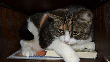 """Viivi-kissa: """"viivi yllättetty kaapista nokosilta.."""" Kuva: Amanda Heino"""