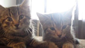 "Sophie ja Tiffany: ""Siskokset huilimassa."" Kuva: Tiia Koskela"