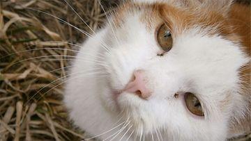 """Karvinen-kissa: """"Karvinen tykkää makoilla kevätauringossa."""" Kuva: Hilda Jussila"""