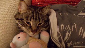 """Felix-kissa: """"Tämä on minun rakas unileluni."""" Kuva: Erika Filatova"""