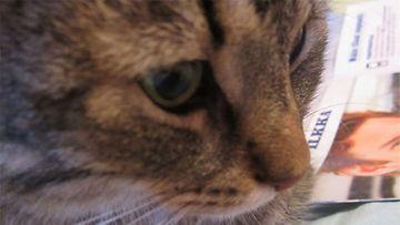 """Uuno-kissa: """"Siis mitäs tuolla tapahtuu?!"""" Kuva: Iida Lampi"""
