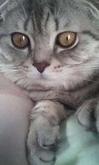 """Miku-kissa: """"Luppakorva mussukkani <3"""" Kuva: Anastasia Hyvärinen"""