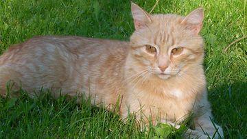 """Nalle-kissa: """"Rakas Nalleni viime kesänä!"""" Kuva: Maila Laiho"""
